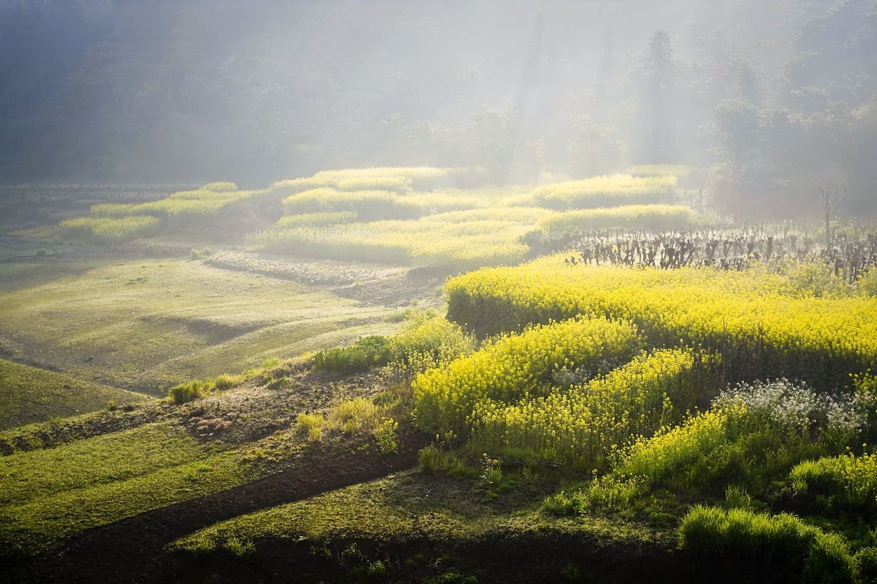 nature, landscape, beauty in nature, tranquil scene, tranquility, scenics, growth, no people, field, agriculture, green color, outdoors, day, fog, tree, rural scene, plant, tea crop, sky