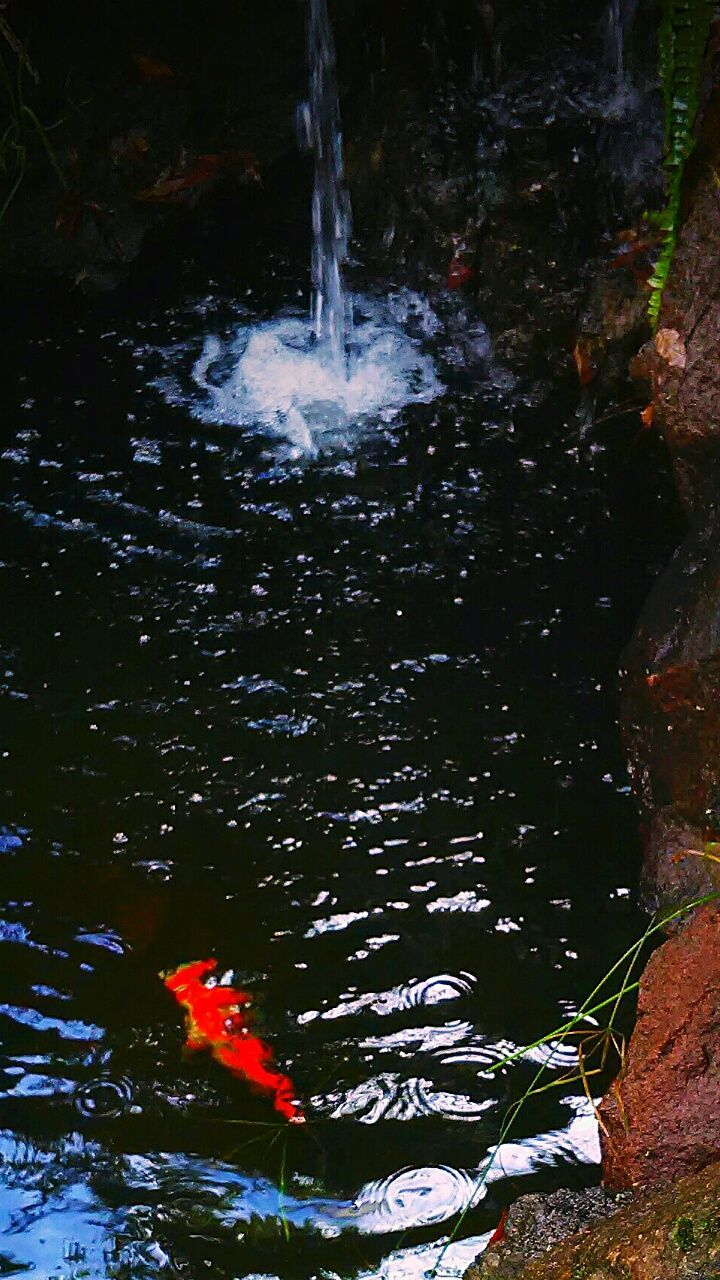 water, koi carp, fish, nature, no people, carp, swimming, waterfront, outdoors, motion, day, animal themes, beauty in nature, close-up
