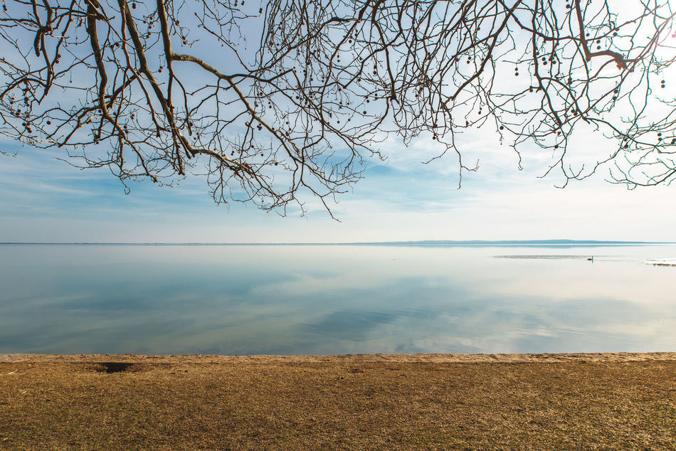 Waiting for the spring Beach Beauty In Nature Bough Calmness Day Lake Landscape Minimal Nature Sky Tree Water Water Reflections Winter Swan