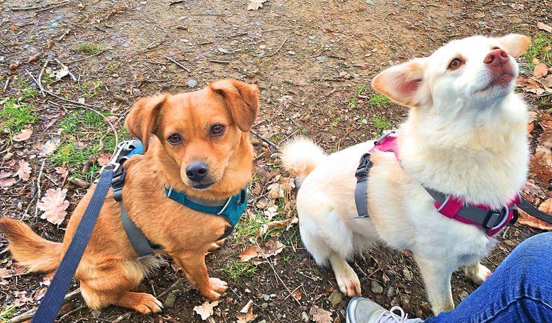 Wolfshagen Dog Holly und Mabel Outdoors Portrait Day