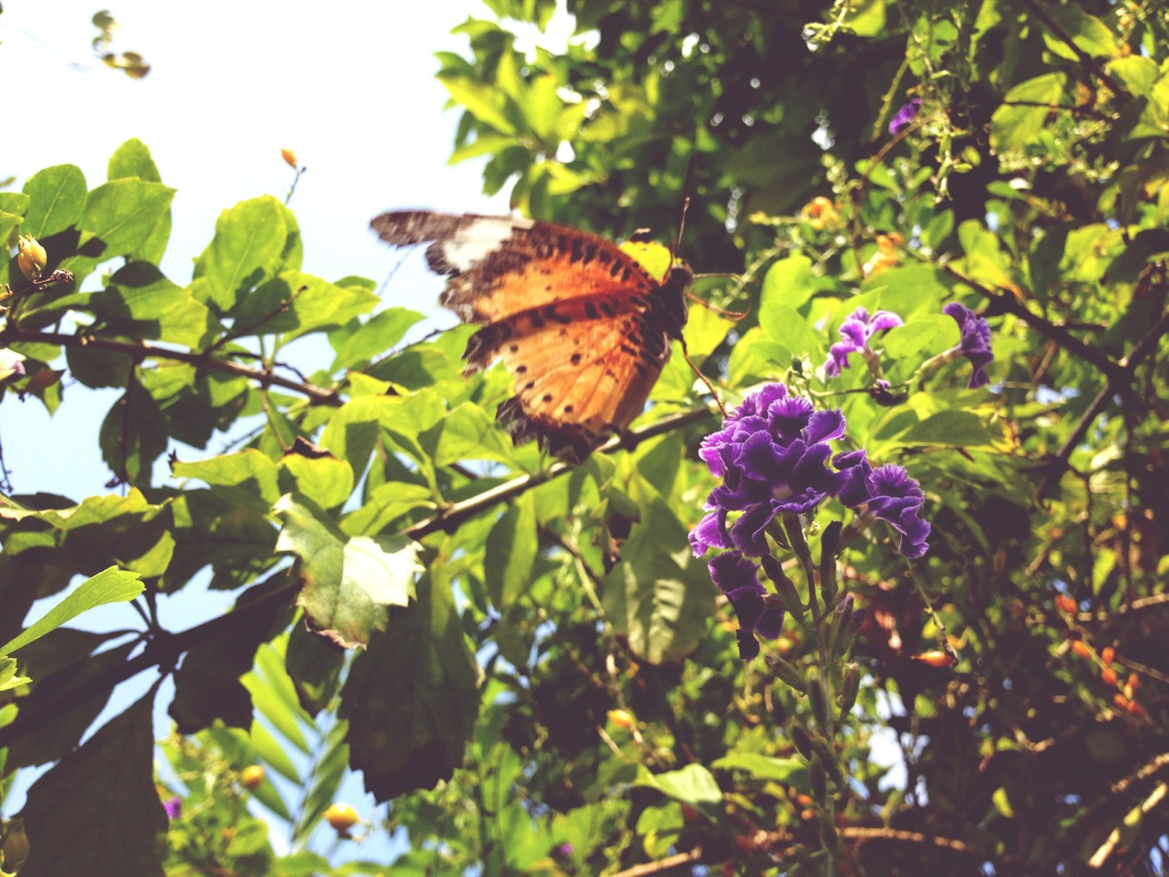 one animal, leaf, animals in the wild, animal themes, wildlife, flower, growth, insect, plant, butterfly - insect, nature, beauty in nature, butterfly, fragility, low angle view, green color, perching, close-up, branch, tree