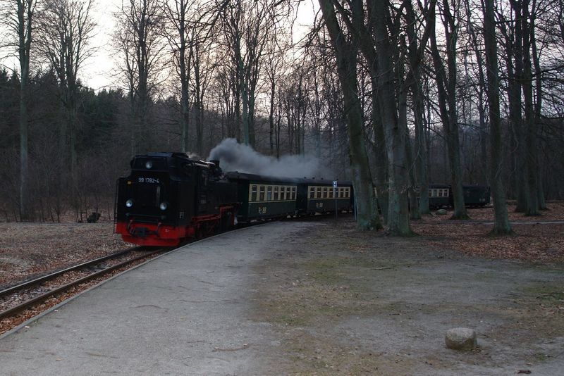 Rasender Roland  Bare Tree Day Land Vehicle Locomotive Mode Of Transport Nature No People Outdoors Public Transportation Rail Transportation Sky Steam Train Train Train - Vehicle Transportation Tree W-rügen