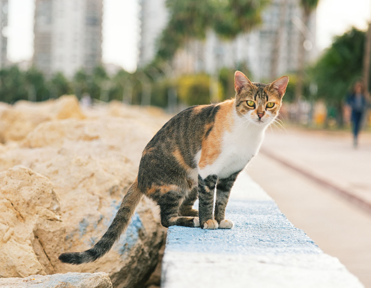 Street Cats Animal Themes Boulder Cats Close-up Coastline Day Domestic Animals Domestic Cat Feline Feline Portraits Focus On Foreground Mammal Mersin Turkey No People One Animal Outdoors Pets Rock Formation Street Cats