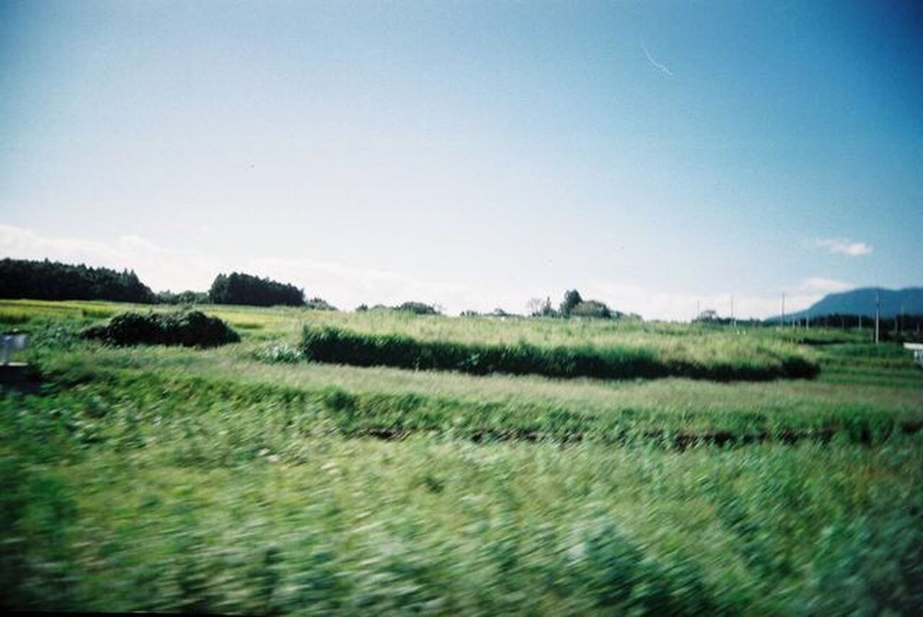 Grass Clear Sky Landscape Nature Green Driving Drivebyphotography Scenics Growth Rural Scene Tranquil Scene No People Beauty In Nature Snap Snapshot Snapshots Of Life EyeEmNewHere Toycamera Filmisnotdead Film Photography Agfa Gunma Japan Blurred Motion