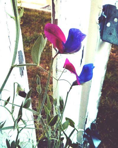 Those flowers look like birds ?! ??Birds Flowers Garden