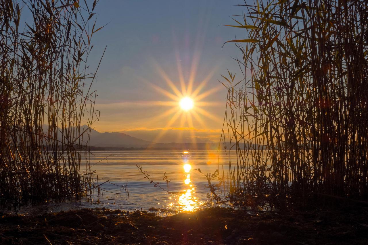 Alpenvorland Chiemsee Herbst Schilfgras Silhouette Sonnenstern Sonnenstrahlen Ufer