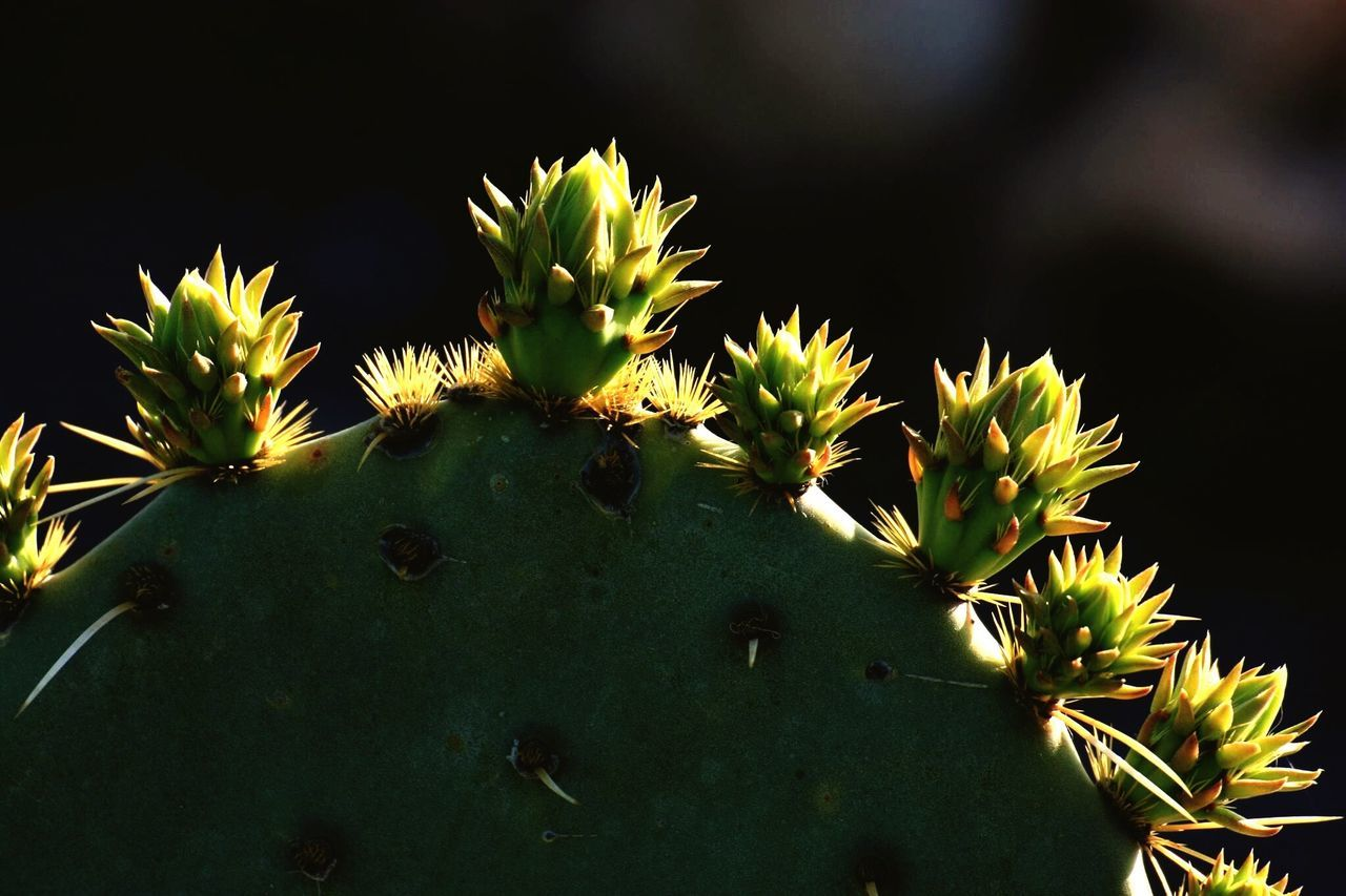 Detail Shot Of Cactus Against Blurred Background