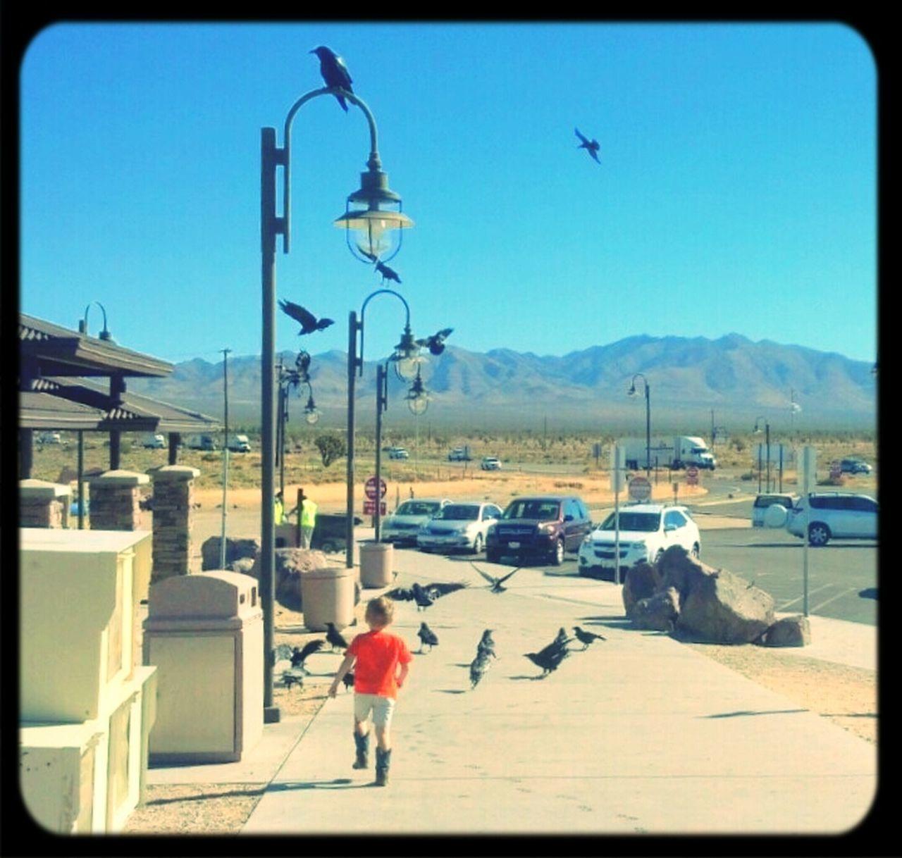Boy. Boots.And Birds. Children Birds Vacation Fun