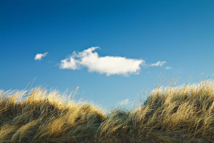 Cloud over a dune. Baltic Sea Beauty In Nature Blue Cloud Coast Countryside Day Dune Grass Green Growth Kühlungsborn Nature Non-urban Scene Outdoors Plant Reed - Grass Family Scenics Shore Sky Tall Grass Tranquil Scene Tranquility Uncultivated Wild Grass