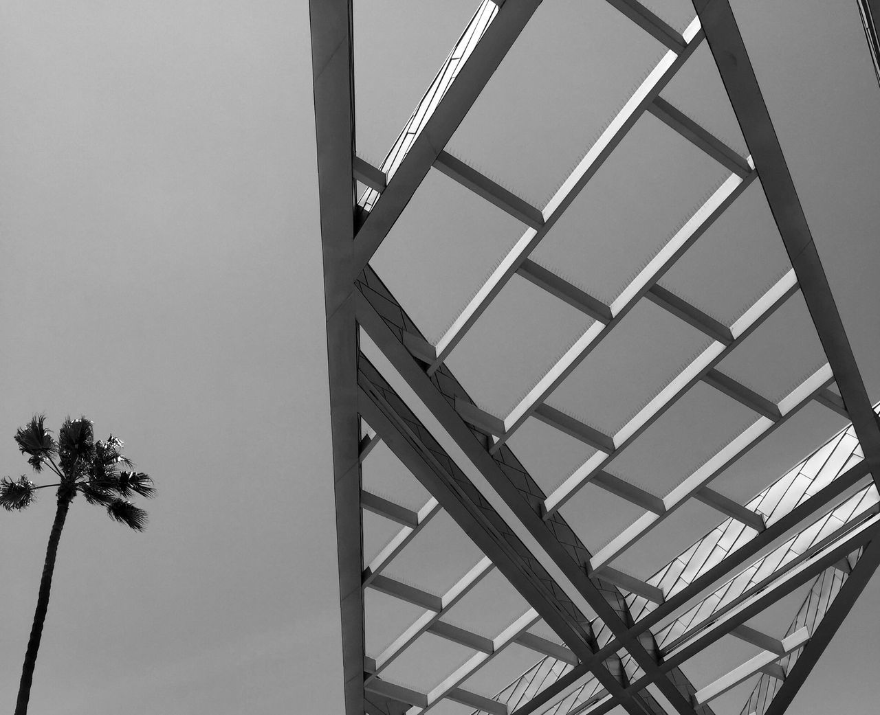 Mrtal Lines Over Head Palm Tree Los Angeles, California Palm Tree Sky Black & White Arcitecture