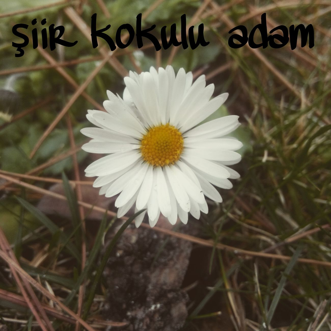 şiir Kokulu Adam