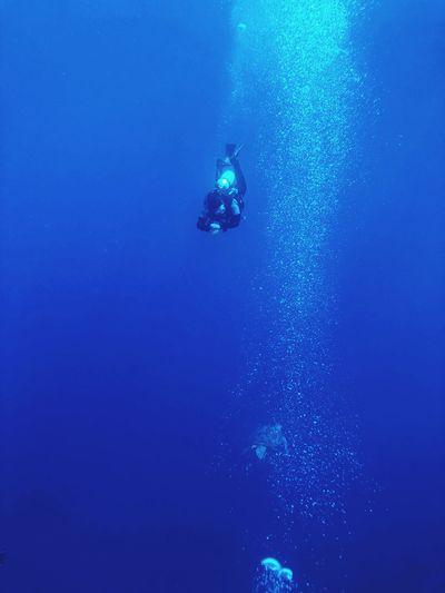 diver meets turtle in deep blue sea Dive Photography Turtle Animal Themes Blue Underwater Scuba Diving Exploration Adventure UnderSea Water Nature Scuba Diver Sea