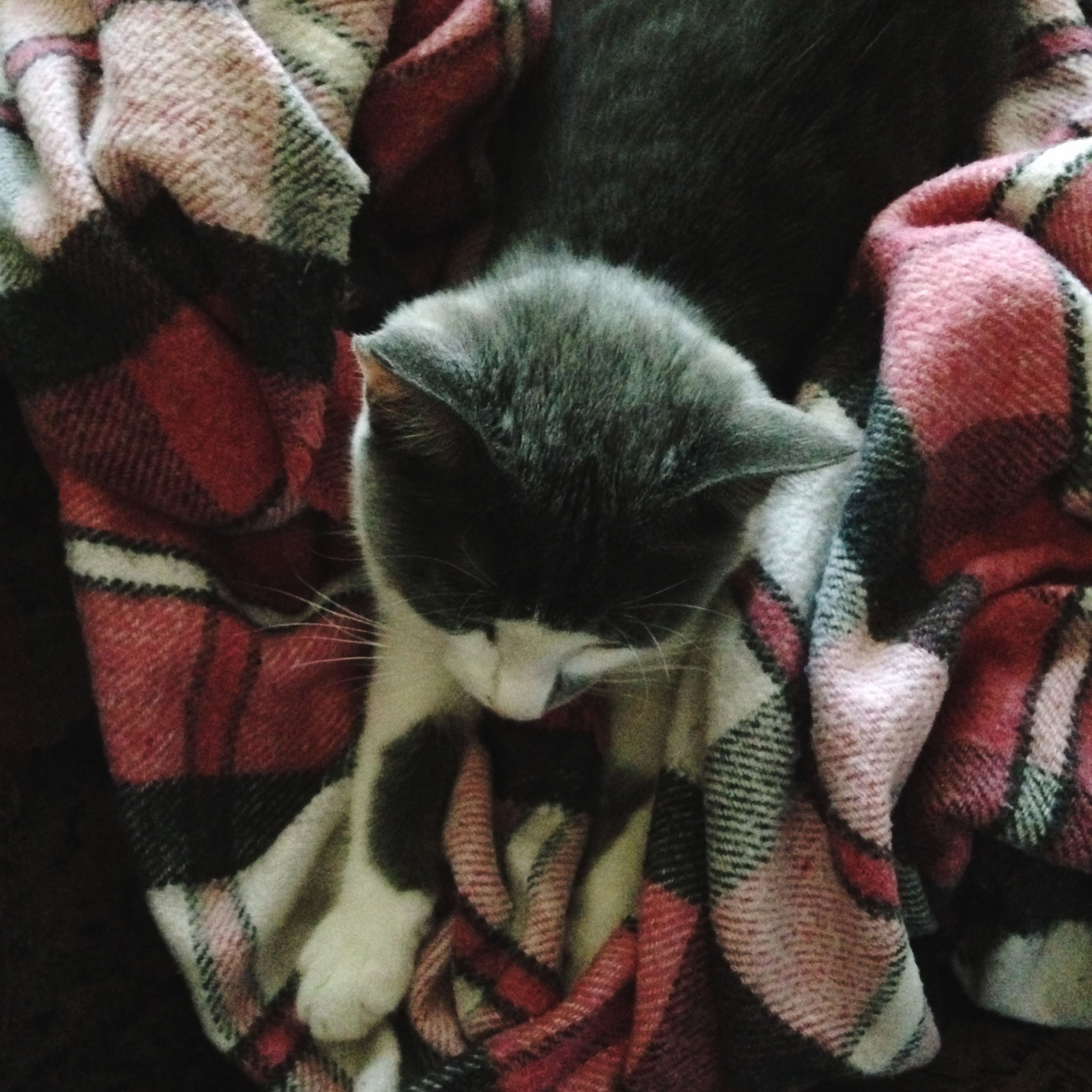 pets, bed, relaxation, sleeping, mammal, blanket, resting, lifestyles, lying down, comfortable, sofa, close-up, casual clothing, part of