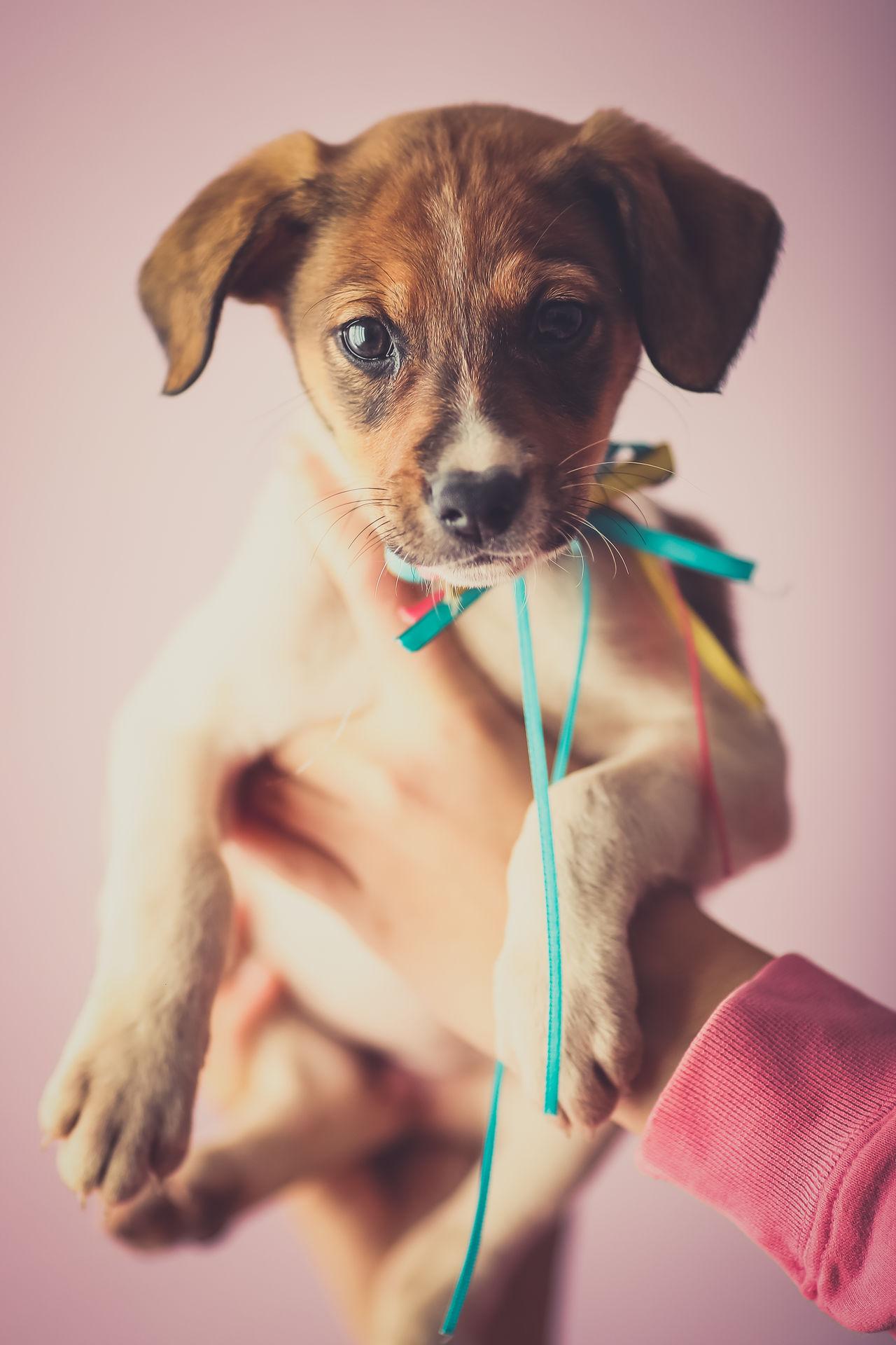 Animal Themes Dog Domestic Animals Little One Animal Pet Pets