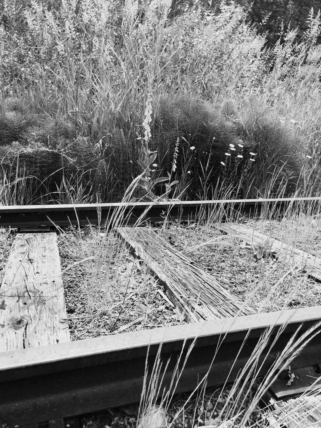 No People Day Plant Outdoors Nature Growth Grass Tree Railroad Track Field Nature Blackandwhite Plant Flower Landscape