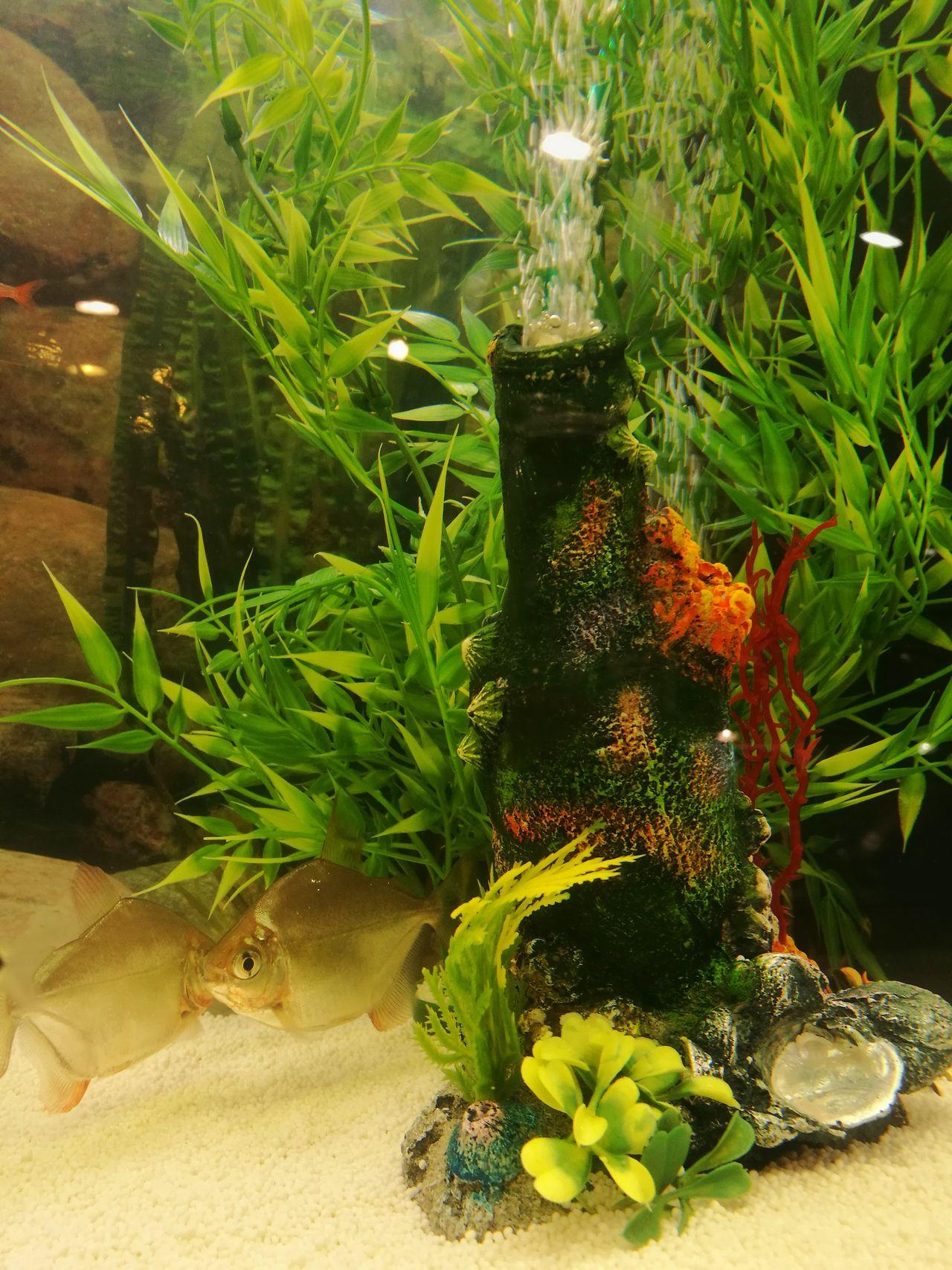 Aquarium Green Decoration Aquarium Fish Aquarium Photography Aquarium Life Underwater World Fishtank Fish Tank Decoration Fish Fish Tank Reflections Aquarium Close-up Piranhas