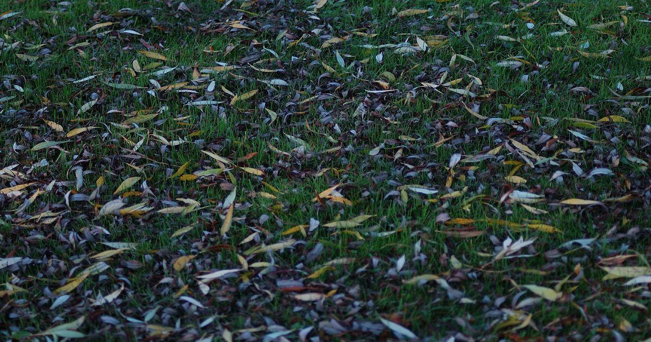 Autumn Automne Automne🍁🍂🍃 Parc Jardin Jardinsdeau Feuilles Feuilles D'automne Grainedenature Puisaye Coeurdepuisaye Yonne Yonnetourisme Igersyonne Igersbourgogne