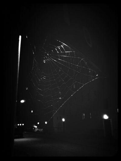 Night Life Night Crawler Nature Spider Webb