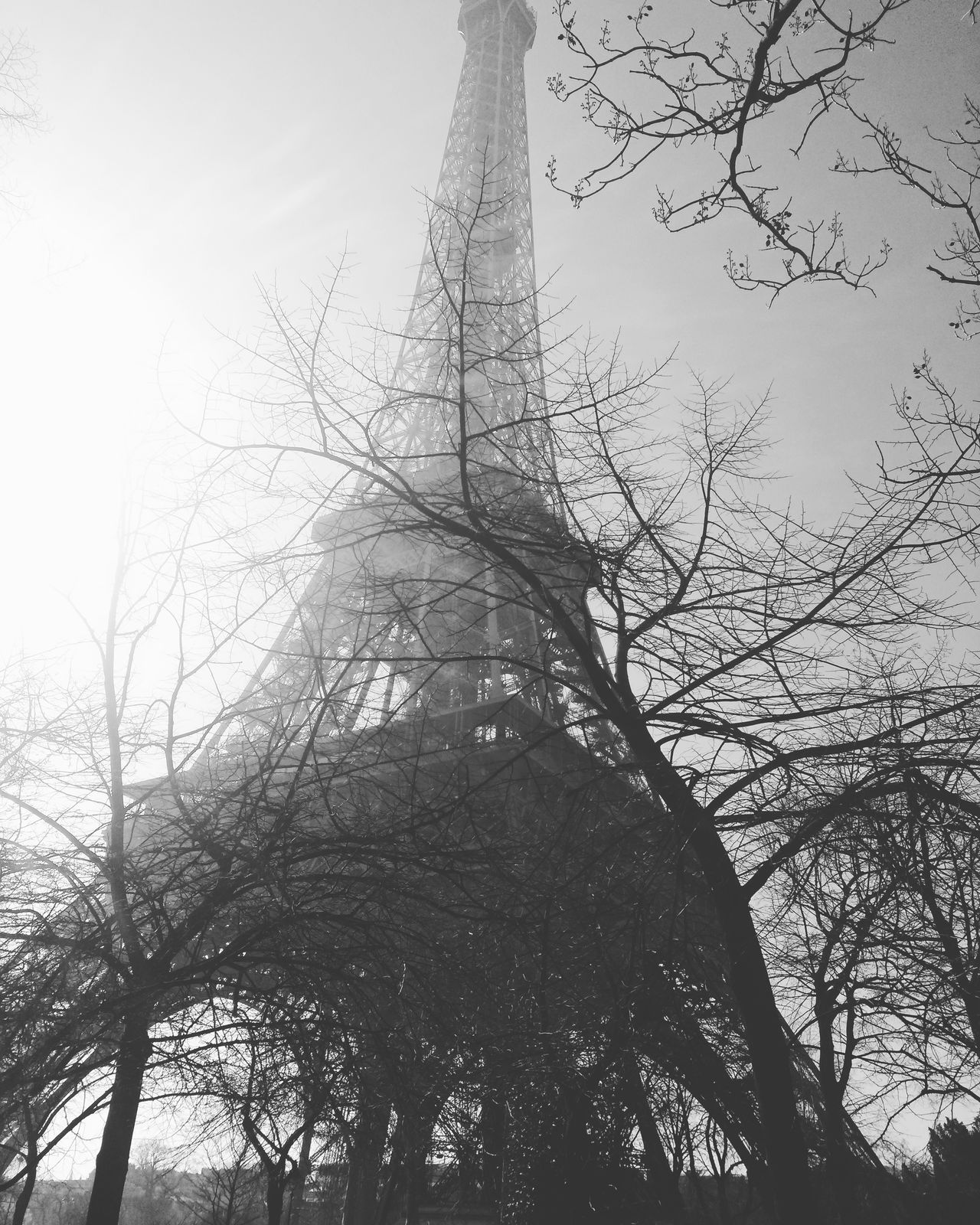 Tourist Attraction  Tourism Travel Travel Photography Historical Building Tourist Attraction  Architecture Art Cloud - Sky Building Exterior Travel Destinations Built Structure Outdoors Eiffel Tower Paris Branch Low Angle View Tree France Day Sky Black And White Black & White