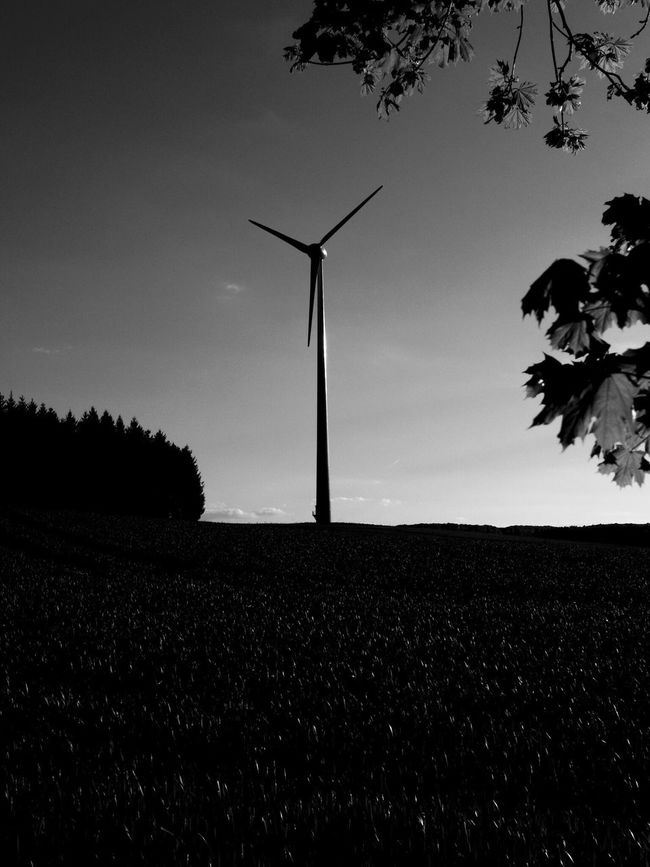 Rural Scene Alternative Energy Tree Renewable Energy Fuel And Power Generation Environmental Conservation Nature Field Wind Power Growth Wind Turbine Windmill No People Tranquility Agriculture Sky Tranquil Scene Scenics Landscape Outdoors
