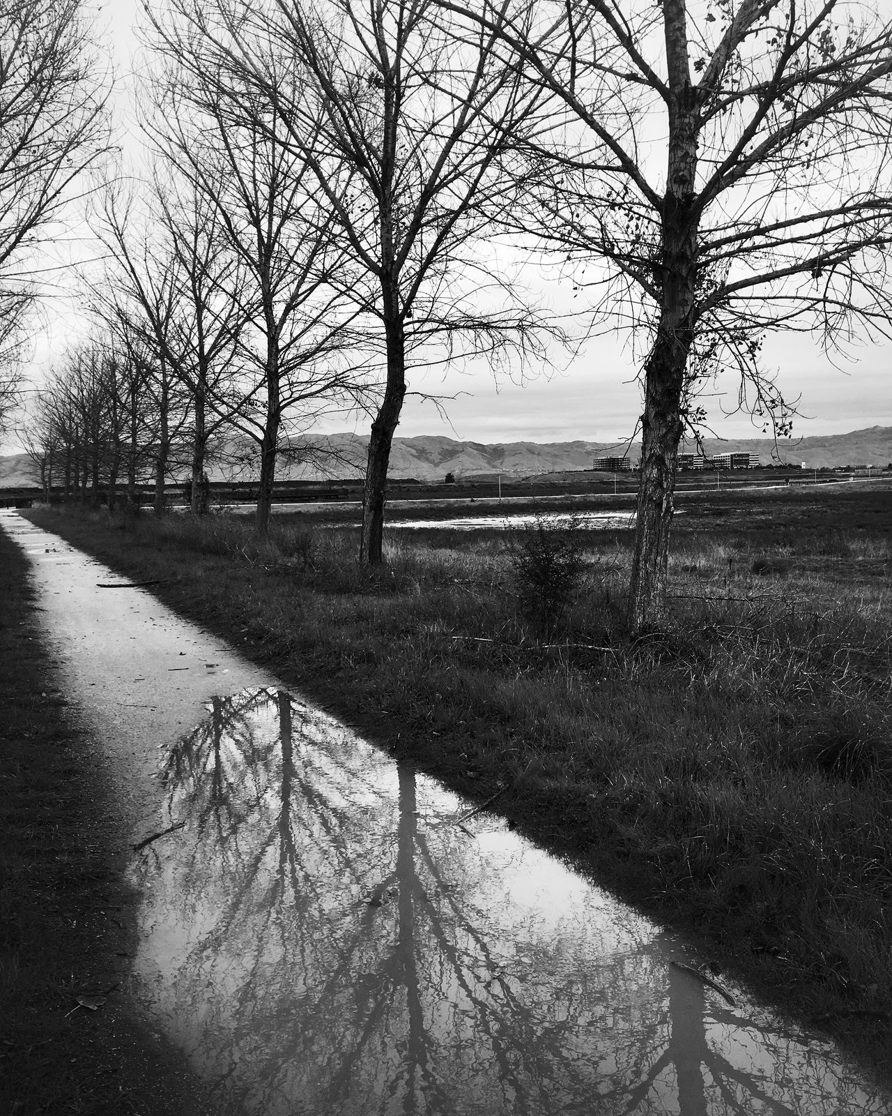 Baylands Tree Nature Bare Tree Tranquility Beauty In Nature Outdoors Landscape Bw_collection Shootermag Blackandwhite California Nature_collection Reflection Fine Art Photography Puddle Baylands Park Sunnyvale