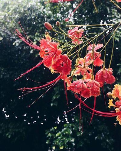 Vscocam VSCO Flowers