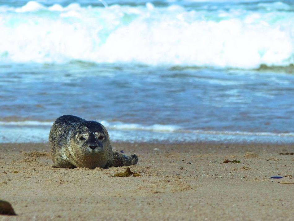 Beautiful stock photos of seal, Animal Themes, Animals In The Wild, Calm, Coastline