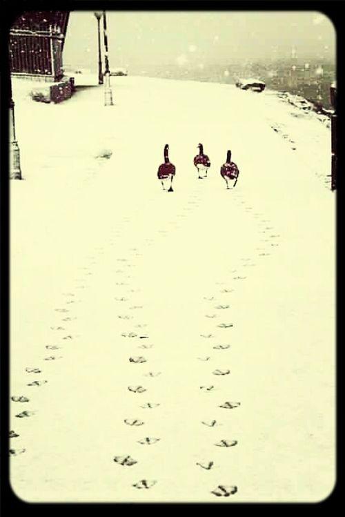 First Eyeem Photo Cute Ducks Wintertime