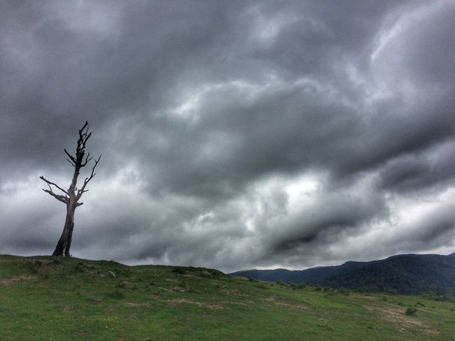 Lone tree Storm Clouds Clouds Lone Tree Sky Nature Tranquil Scene Outdoors Cloud - Sky Day Mountain