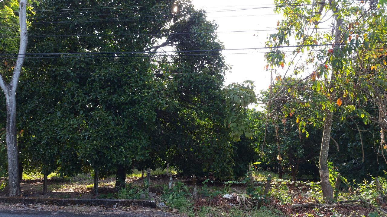 tree, growth, nature, day, no people, outdoors, plant