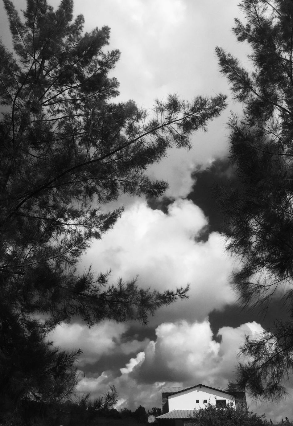 Low Angle View Tree Sky Cloud - Sky Built Structure Architecture Building Exterior Branch Scenics Day Tranquil Scene Tranquility Directly Below Nature Beauty In Nature Cloud Cloudscape Outdoors Cloudy Tall - High
