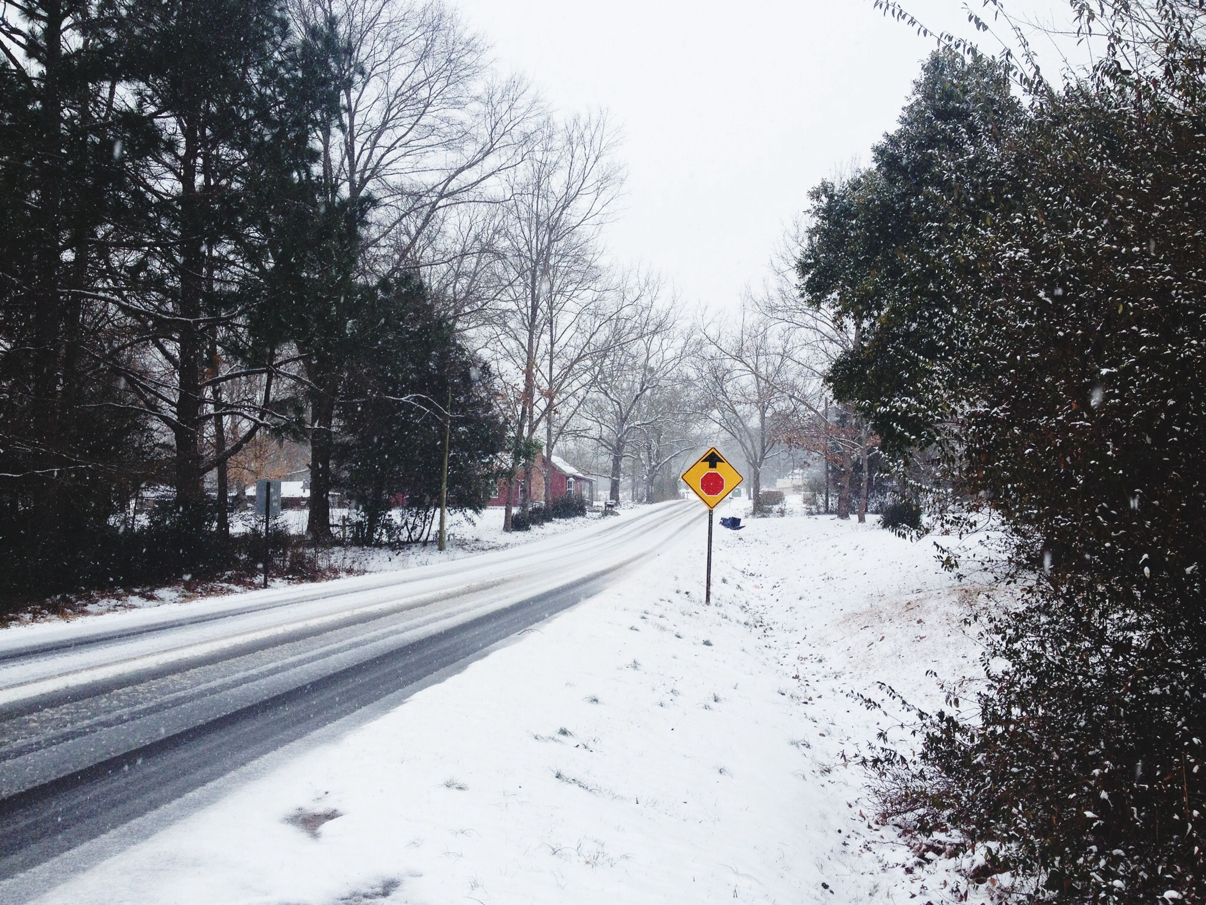 snow, winter, cold temperature, tree, season, weather, the way forward, full length, transportation, walking, bare tree, lifestyles, leisure activity, rear view, men, unrecognizable person, road, nature