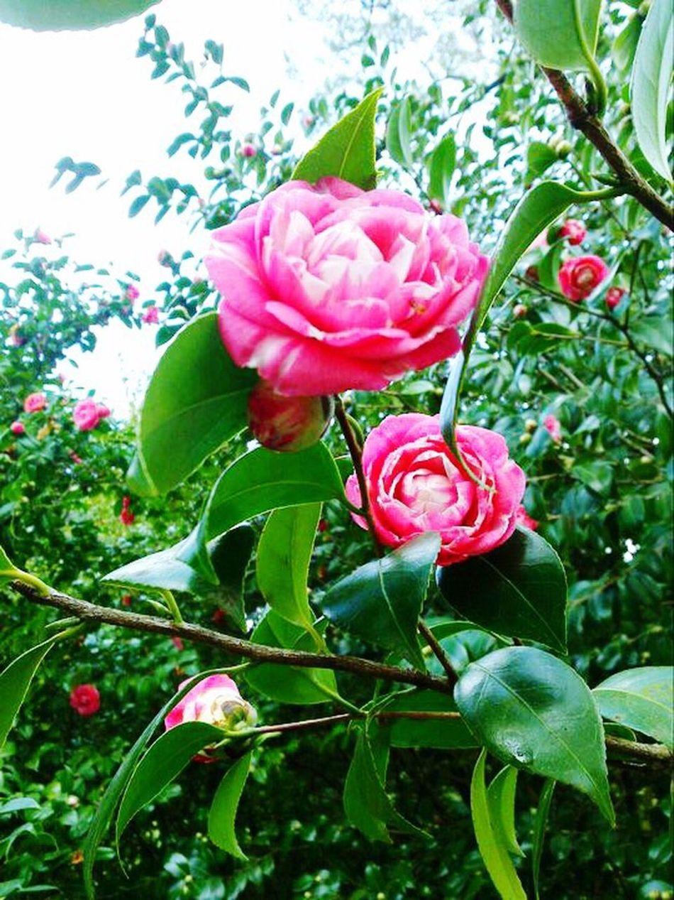 Flowers Roseflower Colours Spring Colours Spring Spring Flowers