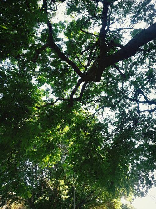 Hello World Trees Summer Ending