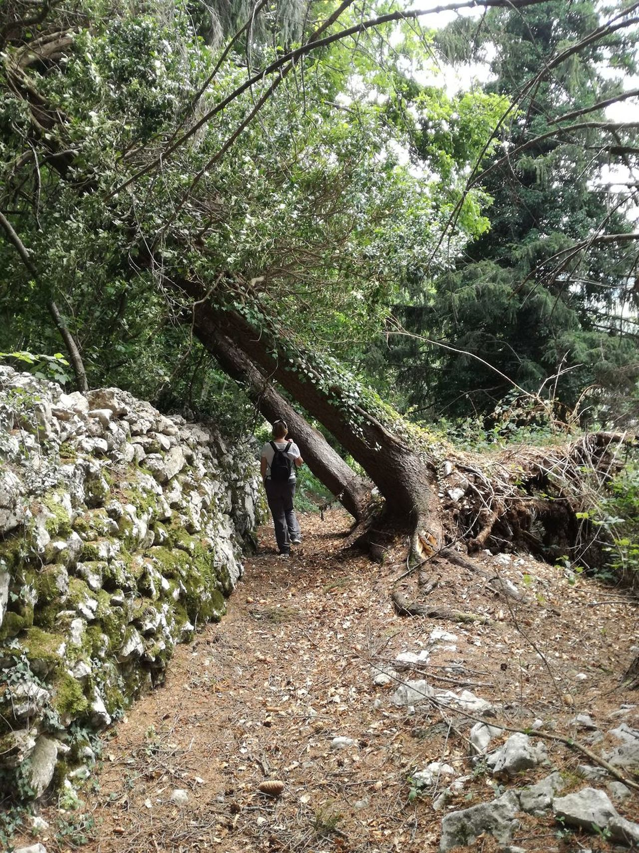 Fallen Tree Nature Tree Outdoors Hiking Trail Lifestyles People Beauty In Nature Landscape Forest Landscape_photography Path In Nature The Way Forward