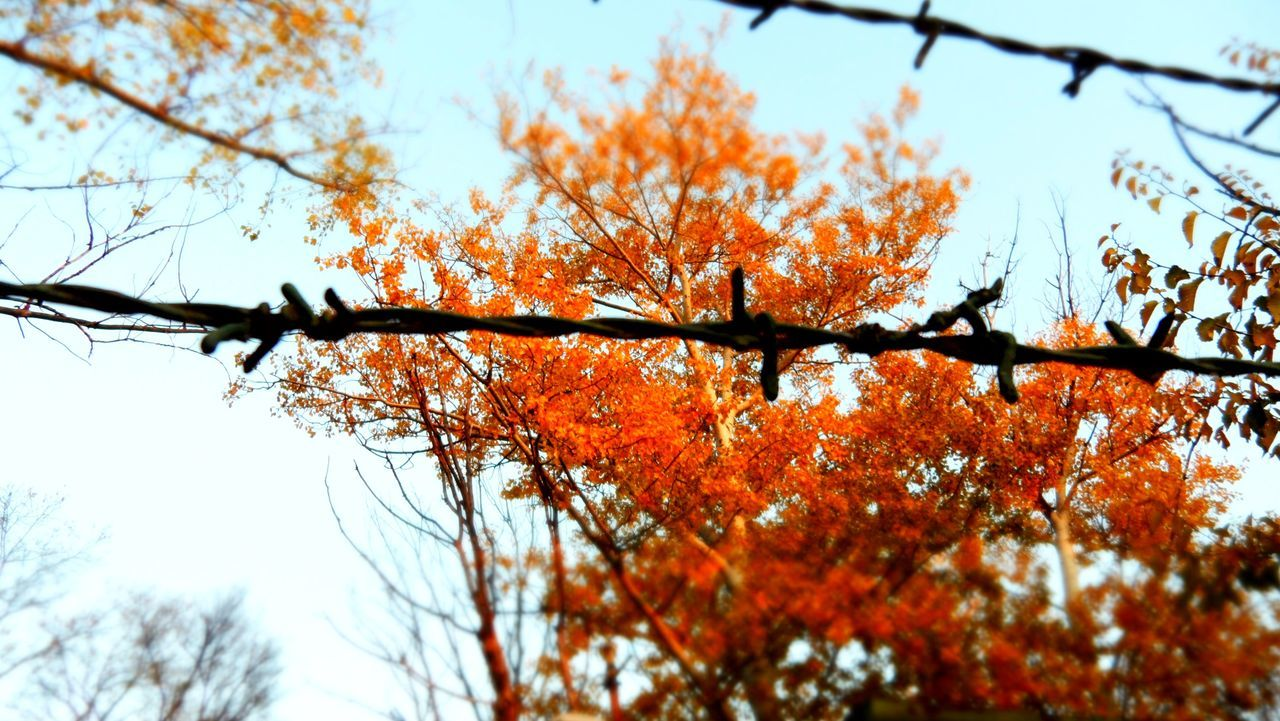 Autumn Branch Fightforyourrights Freedom Growth Low Angle View Nature No People Outdoors Szentes Tree