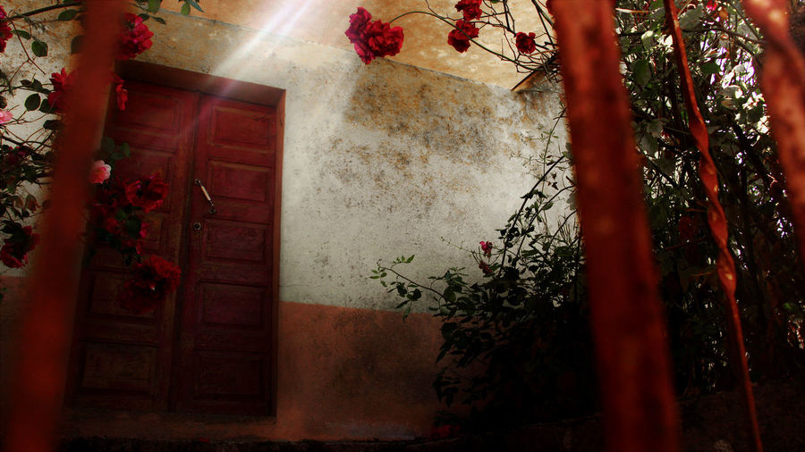 The real Red Rose Mansion House Houses Old House Old-fashioned Old Architecture Old Door Flowers Red Flower Roses First Eyeem Photo