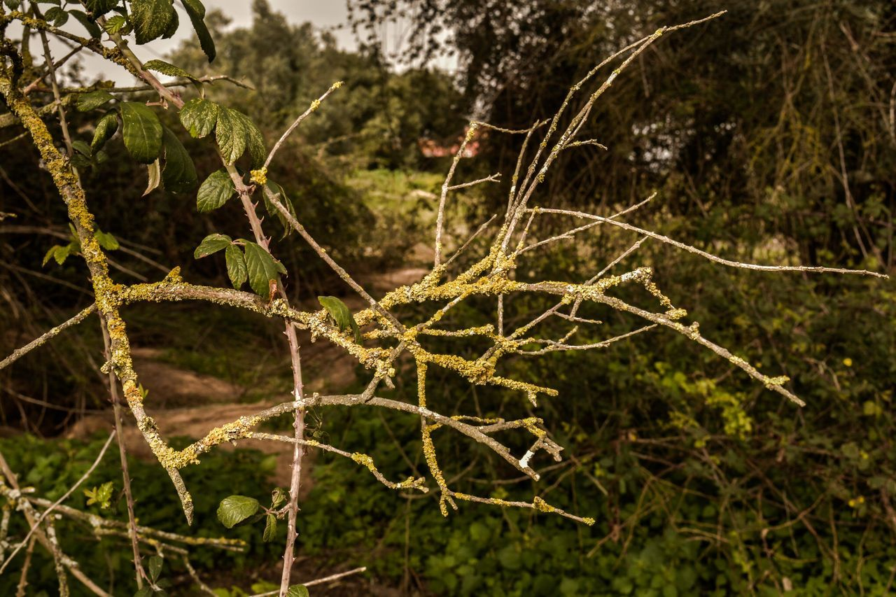 Beauty In Nature Branch Close-up Day Growth Nature No People Outdoors Plant Spider Web Tranquility Tree