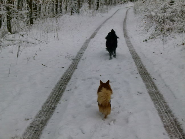 Shades Of Winter EyeEmNewHere Dog Animal Animal Themes Pets Snow One Animal Cold Temperature Domestic Animals Winter German Shepherd Animal Wildlife Living Organism Outdoors Mammal No People Day