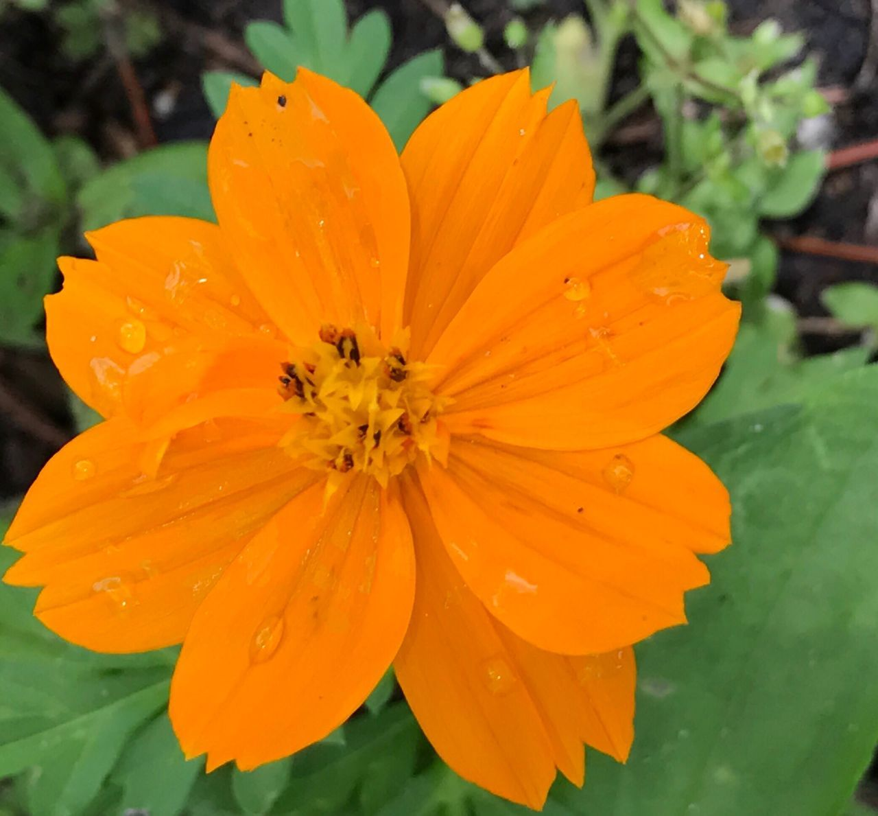 flower, petal, fragility, beauty in nature, nature, freshness, growth, flower head, orange color, plant, water, drop, wet, blooming, outdoors, no people, pollen, close-up, day, yellow
