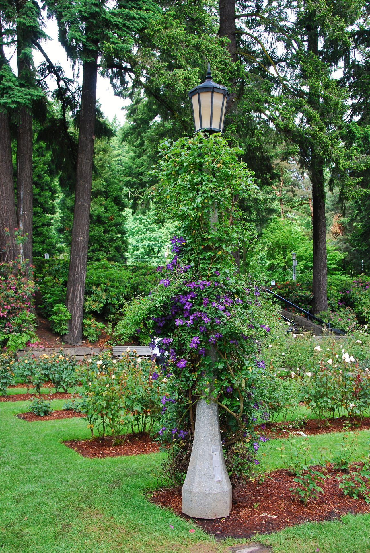 Portland, OR Portlandrosegarden USA EyeEm Nature Lover Eyeemnature