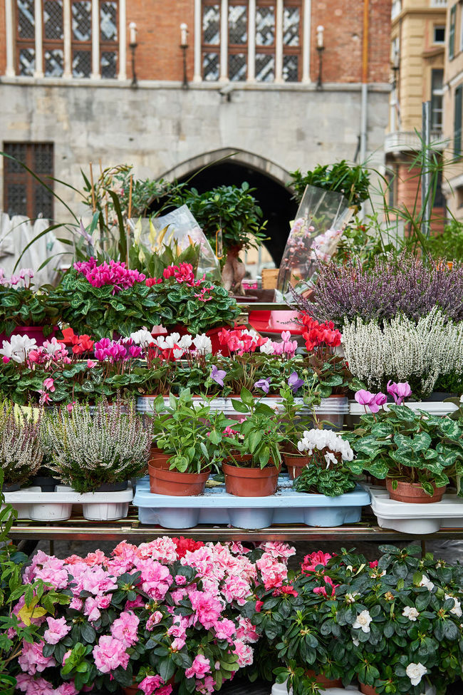 Beauty In Nature Blossom Botany Bouquet Building Exterior Day Flower Flower Head Flower Pot Flower Shop Formal Garden Fragility Freshness Growth In Bloom Multi Colored Nature Outdoors Petal Pink Color Plant Plants Springtime Variation