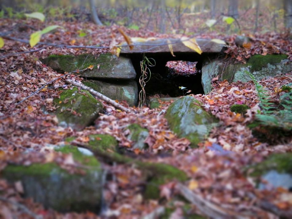 autumn portal. A Walk In The Woods HikingForest Abandoned Stones Autumn Fall Beauty Protecting Where We Play
