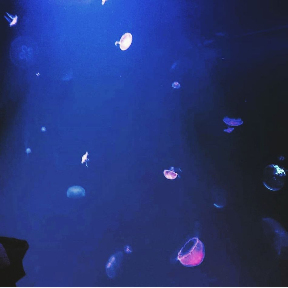 Glowing jellyfish Jelly Fish Fish Underthesea OceanCity Oceanphotography Glowing In The Dark Lieblingsteil