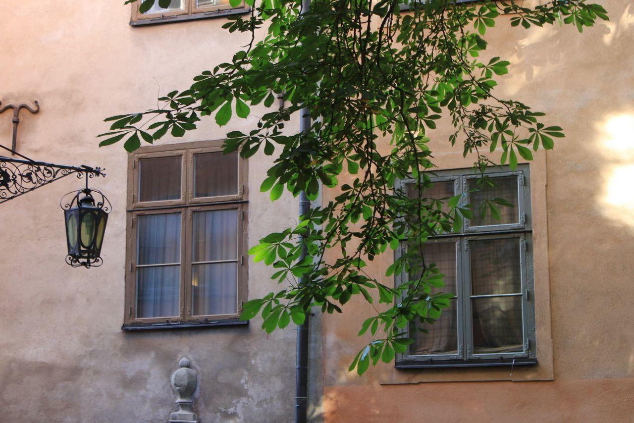 Urban Window Built Structure House Window Coloured Window Tree Lantern City Oldtown