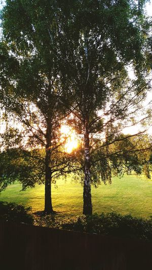 Cherry Hinton Cambridge Morning Sunrise EyeEm Nature Lover Tree Lifeofgreen Good Morning Sunshine Eyem Gallery