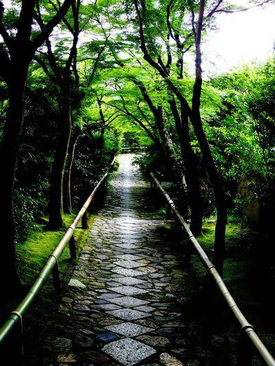 Kyoto Japan Trees Nature Green Way Eyefish