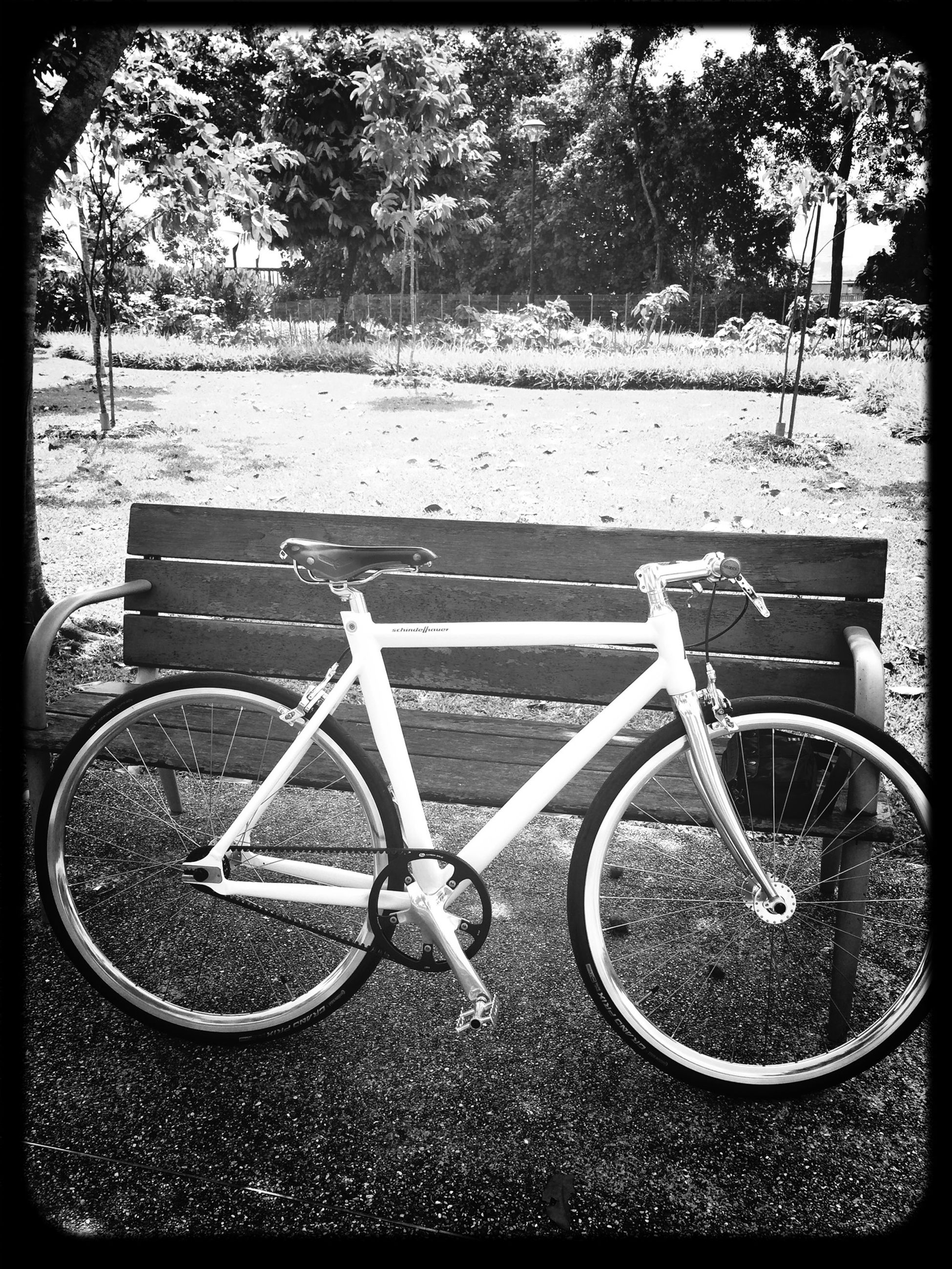 transfer print, bicycle, auto post production filter, transportation, tree, land vehicle, mode of transport, stationary, park - man made space, day, metal, parked, parking, outdoors, absence, sunlight, no people, playground, close-up, wheel