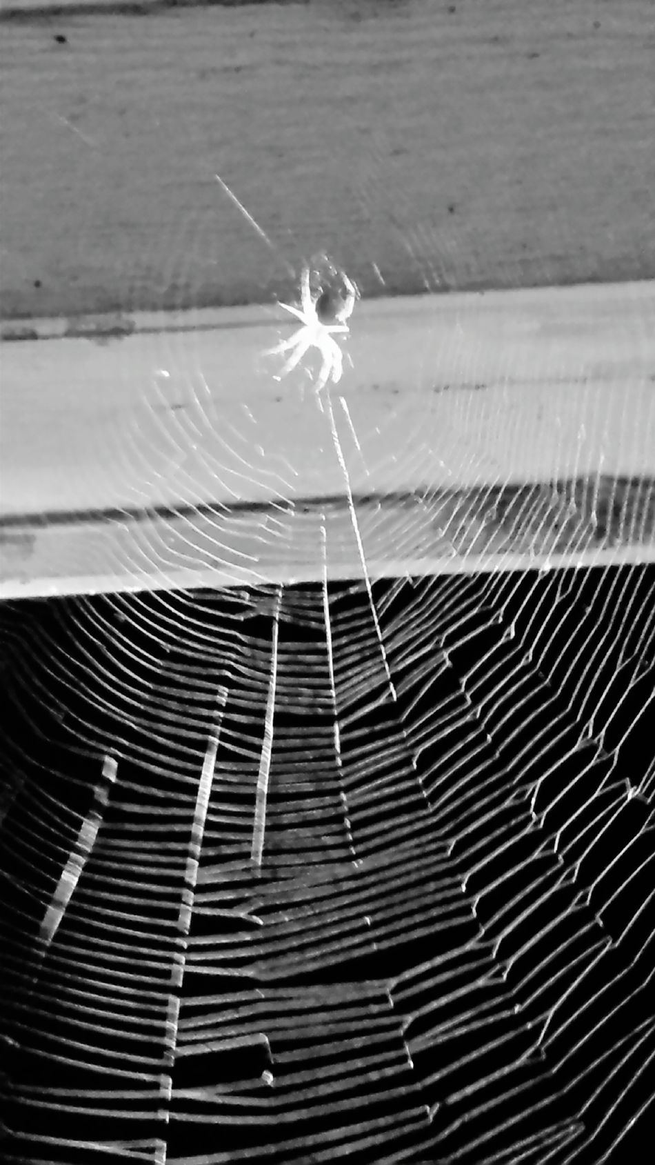 BnW Web Spiderweblines Nature On Your Doorstep EyeEm Nature Lover LOOK HARD 👀 Spider Den This Week On Eyeem Front Porching Country Life Taking Photos