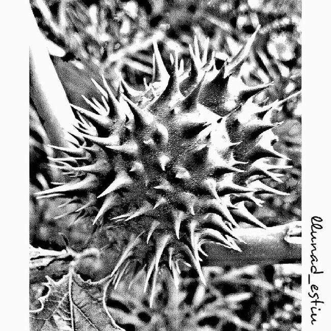 Macrogardener Macro_captures Macro_admirer Macro_flower_passion vivir_to2_creative vivir_to2_nature vivirto_2 vivir_to2_bw ig_cameras_united ig_cameras_united_bw